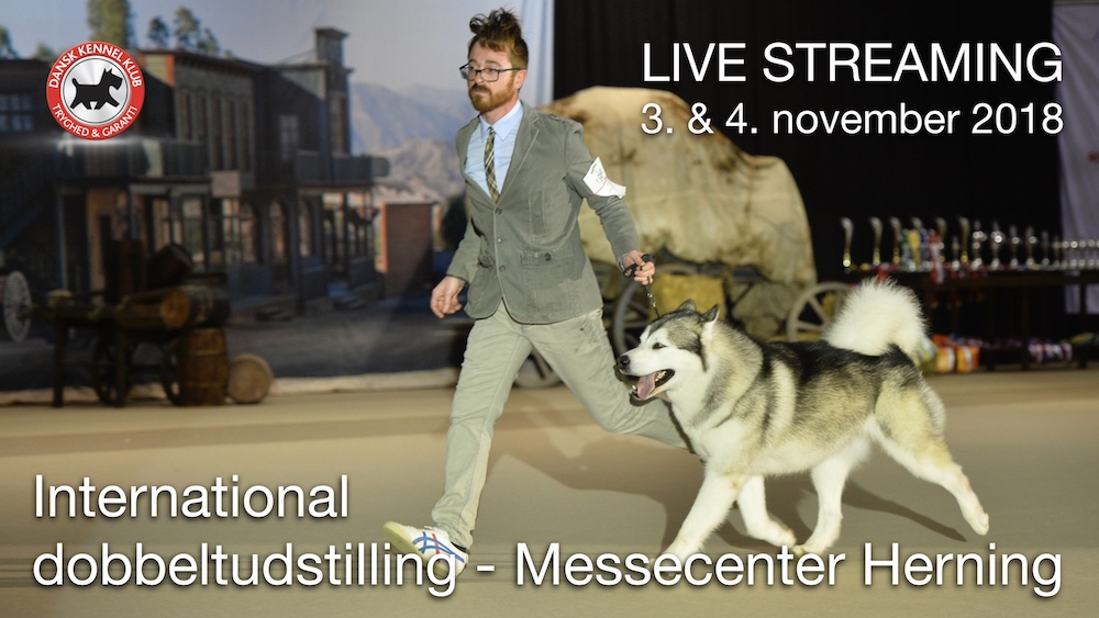 Live streaming hundeudstilling2018 site